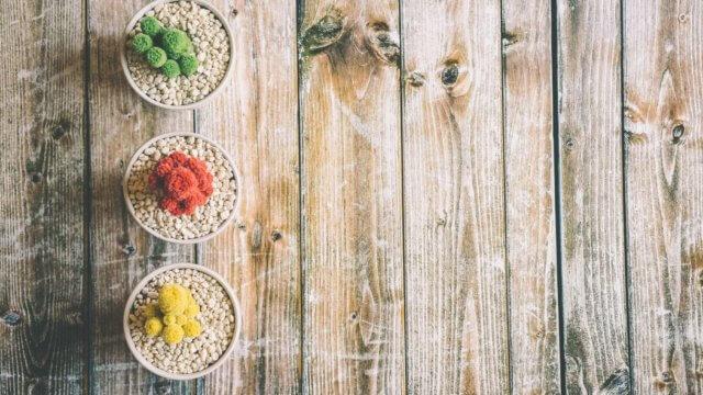3つの色違いの盆栽